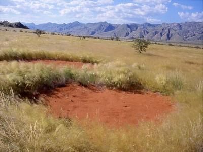 Fairy circle Namibia